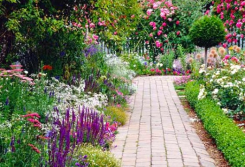 Perennials & Path